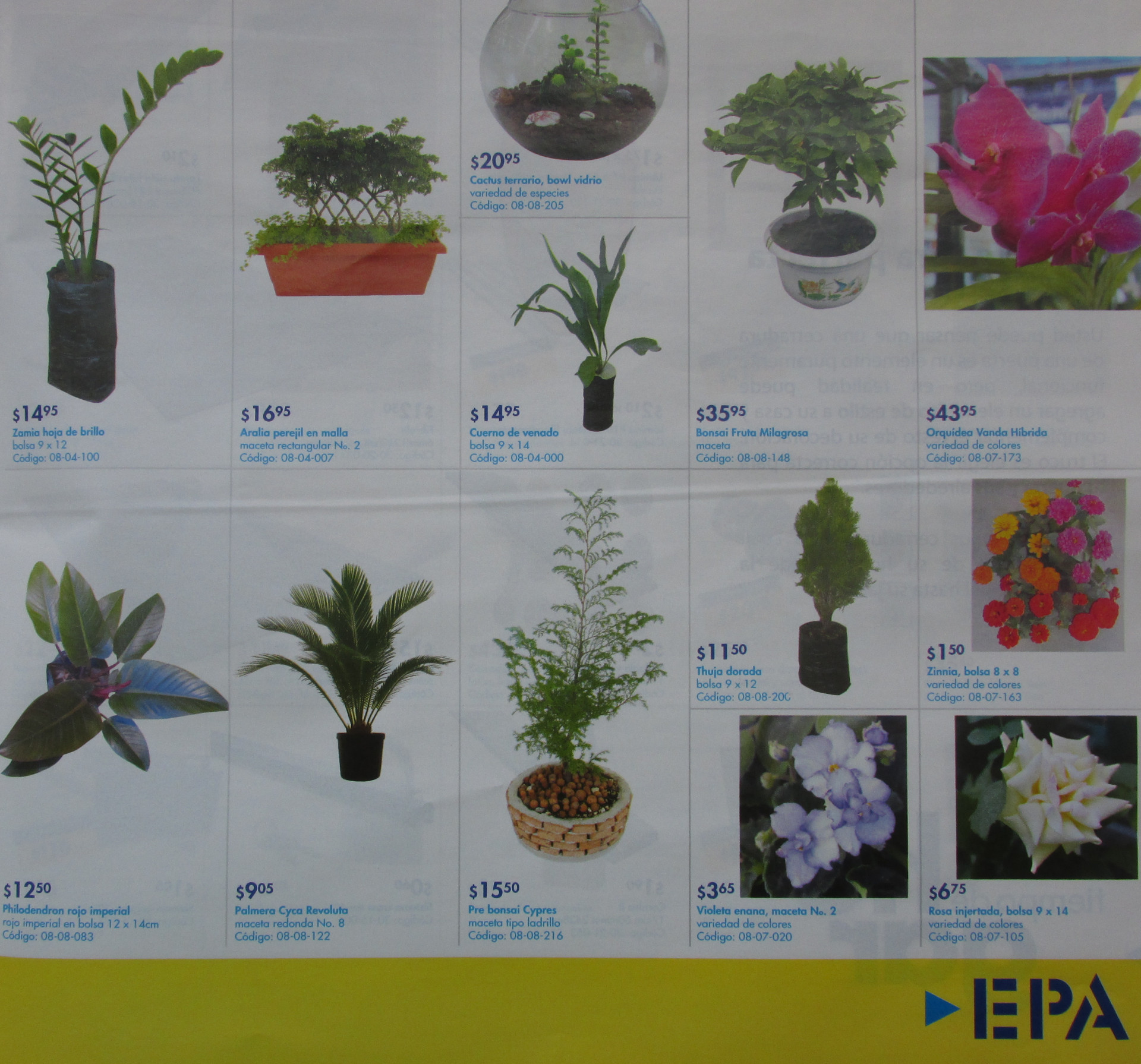 Vivero plantas decorativas exoticas y tropicales epa for Vivero de plantas exoticas